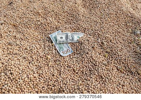 world chickpea market, chickpea prices increase, chickpeas and 100 usd dollars, stock photo