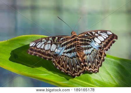 Image of beautiful tropical baterfly on blured background in Thailand stock photo