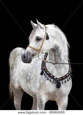 Arabian gray horse on black background-Lg Fridge Magnet Skin (size 36x65)