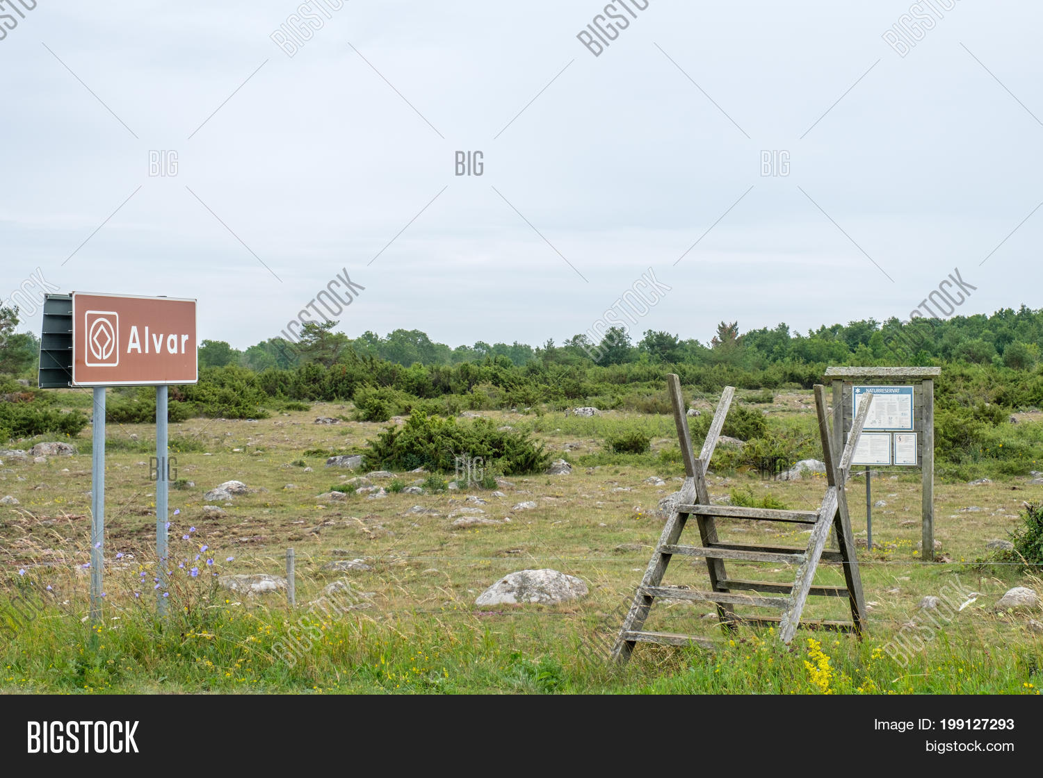 Alvar,Alvaret,Europe,Great,Heritage,July,Nordic,Oeland,Oland,Scandinavia,Scandinavian,Stora,Sweden,Swedish,UNESCO,World,agriculture,attraction,board,countryside,culture,fence,island,landscape,limestone,nature,notice,plain,rural,site,stile,stone,summer,tourism,tourist,traditional,travel,vacation,wall,Öland