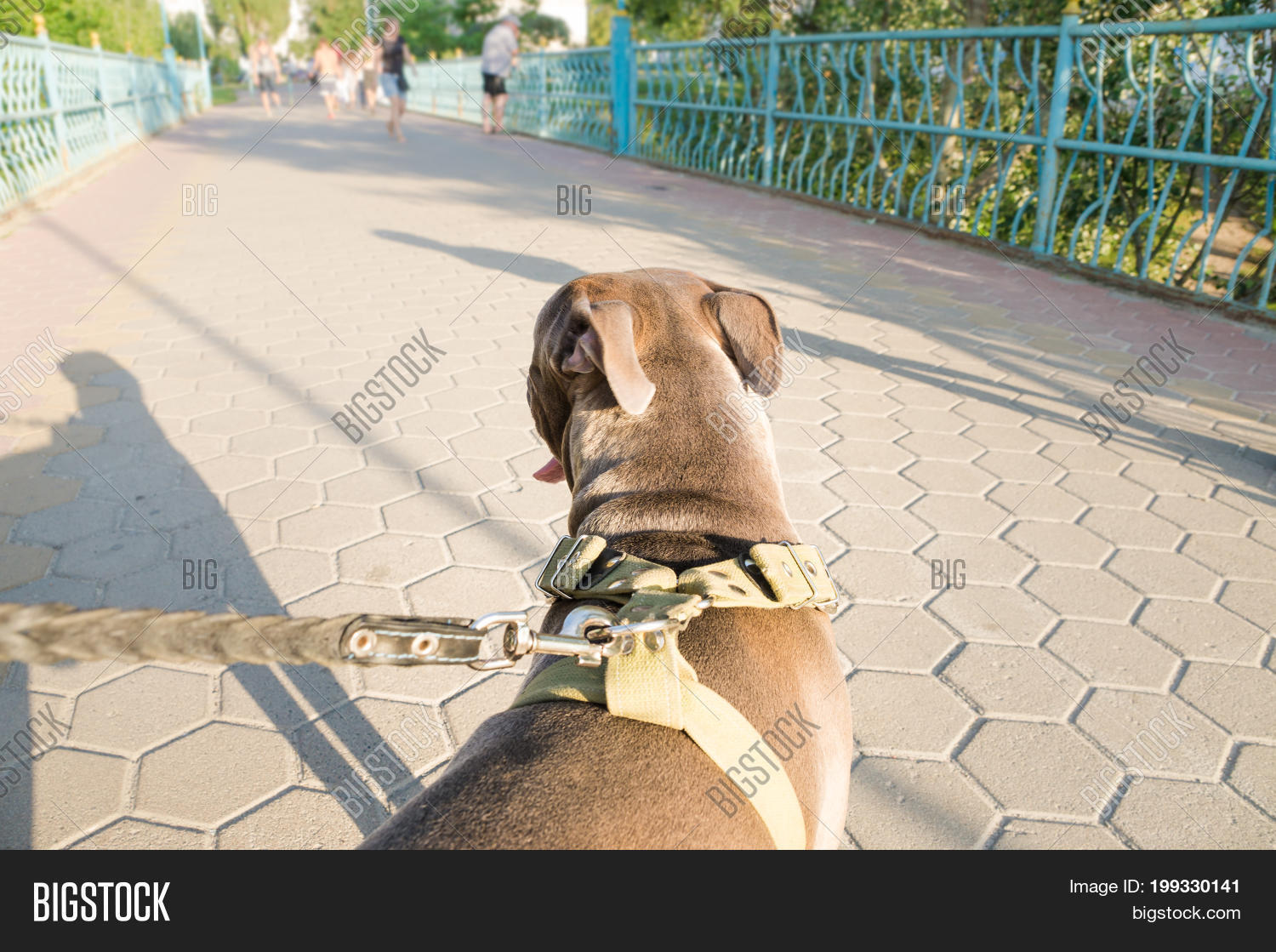 andgle,behavior,dog,dynamic,ears,forward,going,head,human,leash,outdoors,perspective,pet,point,pulling,summer,sunny,untrained,view,walk,weather,wide