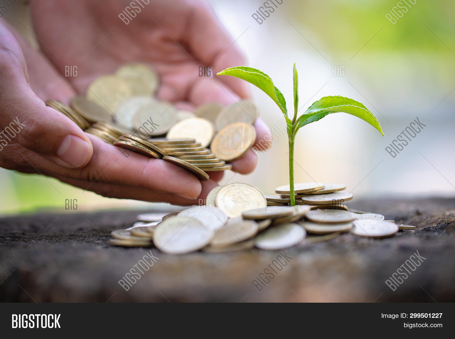accounting,background,bank,banking,benefit,business,care,cash,coin,concept,corporate,currency,deposit,development,dollar,earnings,economic,economy,environment,finance,financial,fund,gold,green,grow,growing,growth,income,interest,invest,investment,leaf,loan,money,nature,pile,plant,profit,rich,save,saving,seed,stack,success,symbol,tree,wealth,white