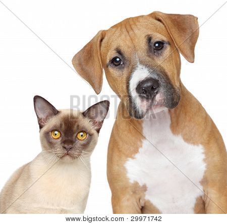 Cat And Dog Portrait On A White Background