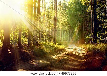 Forêt d'automne magique. parc. belle scène misty vieille forêt avec les rayons du soleil, les ombres et brouillard
