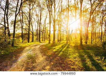 Sunny Day In Summer Forest. Sunbeams Pour Through Trees. Russian